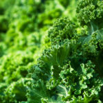Vegan Diets to Reduce Colon Cancer Risk